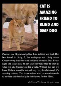 1000+ images about Pet Quotes and Sayings on Pinterest ...
