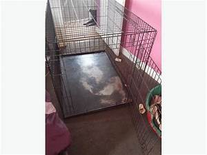 dog crate cage large german shepherd size dudley dudley With dog crate size for german shepherd