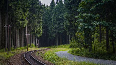 Train Tracks In The Forest 4k Ultrahd Wallpaper