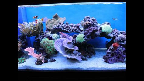 Reef Aquarium Aquascaping by The Of Aquascaping