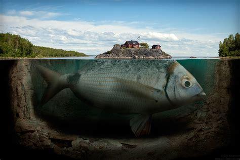 big fish big fish picture of a big fish