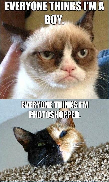 grump cat   girl  split faced cat