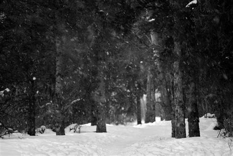 Trees And Snow In Black And White Randall Talbot Artist