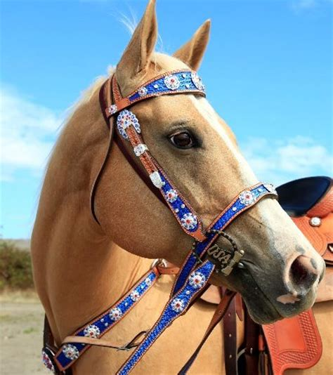 foto de Red White and Blue would make great Rodeo Court Tack