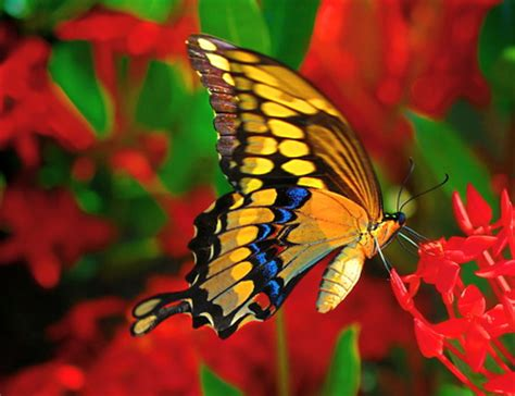 Bright Animal Wallpaper - bright and beautiful butterflies animals background