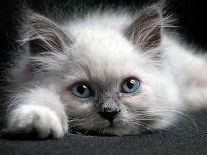 Поздравительная открытка Думаю о Тебе, мой Котёнок!!!... и ...