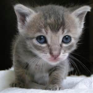 kitty cat kitty cat kitty cat fluffythecat