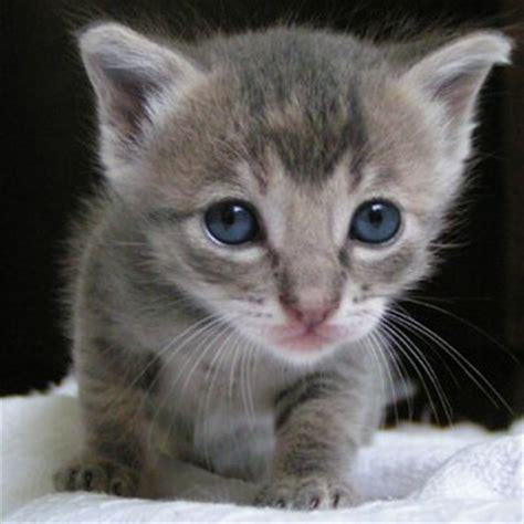 Kitty Cat (@fluffythecat) Twitter