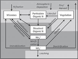 2 Simplified Diagram Of The Terrestrial Nitrogen Cycle With Major Pools