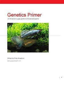 Guppy Genetics Primer