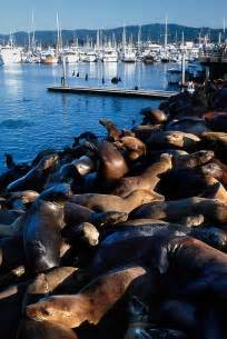 Monterey Bay California Sea Lions