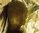 Second Witness Confirms Reptilian Alien Sighting In ...