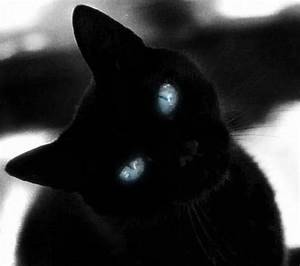 black beauty with blue eyes | Black Cats | Pinterest ...