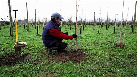 planter un arbre en pot comment planter un arbre
