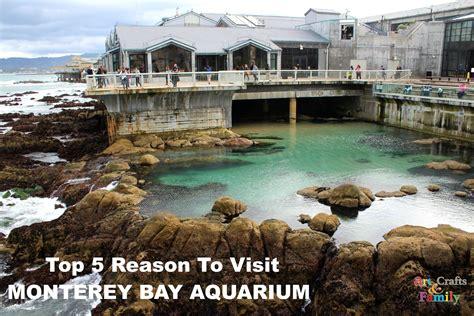 the monterey bay aquarium top 5 reasons to visit the monterey bay aquarium findingdoryevent crafts family