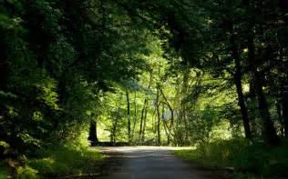 Beautiful Nature Landscape Scenery