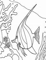 Coral Coloring Fish Angel Reefs Pages Angelfish Between Reef Snake Printable Tropical Sky Getcoloringpages Getcolorings sketch template