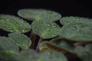 Plante Verte D Appartement : comment nettoyer une plante verte d 39 int rieur ~ Premium-room.com Idées de Décoration