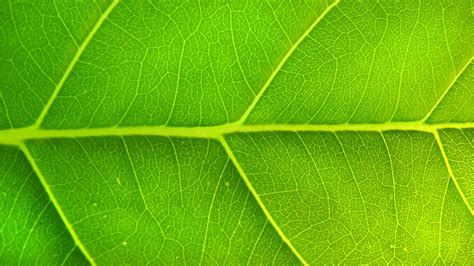 10 Green Hadiths... What Islam Says About Environment