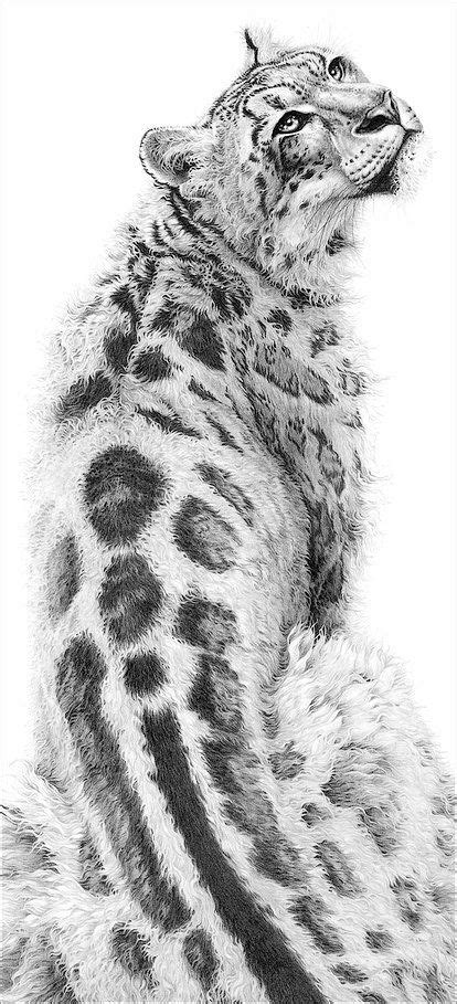 wild cat drawings  gary hodges white tiger tegninger