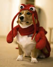 Dachshund Pumpkin Stencil by Lobster Dogs