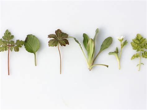 Herbs That Can Grow Inside by 6 Herbs You Can Easily Grow Inside Oola