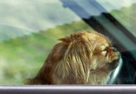 Removing Hair From Car Upholstery by Removing Pet Hair From Car Upholstery Thriftyfun