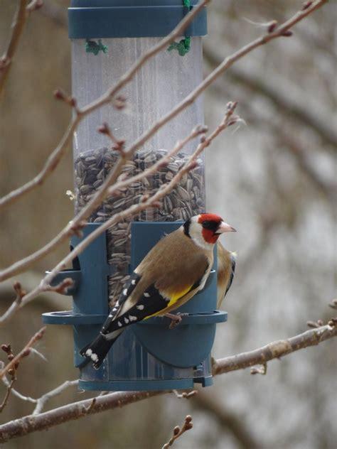winter bird seed bird cages