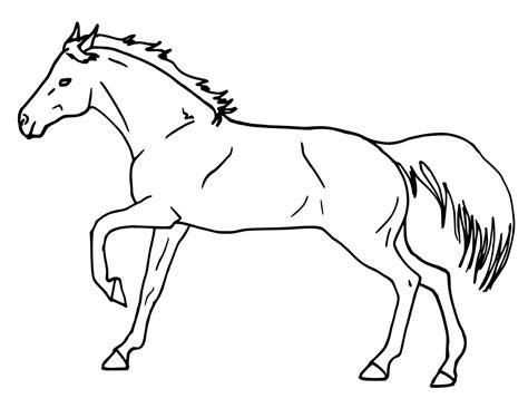 horse profile  animalshhorseshorsehorseprofile