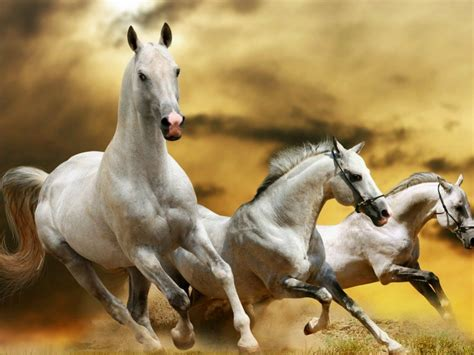 «horses Wallpapers»