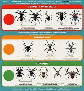 Spider Identification Chart California All About Spiders Types Of Spiders Life Cycle Etc