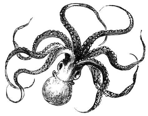 octopus clipart http www varmaphoto data photos 5 1allen s