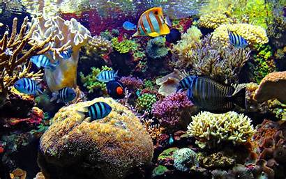 Fish Ocean Sealife Underwater Sea Fishes Nature