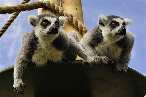drusillas zoo park wikipedia