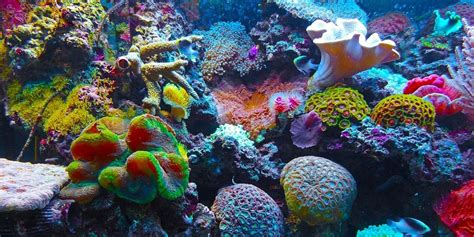 coral reef color how is coral so colorful in netflix s chasing coral
