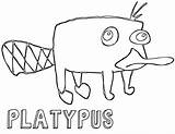 Platypus Coloring Pages Animal Coloringway sketch template