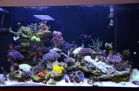 uk reef tank upgraded orphek