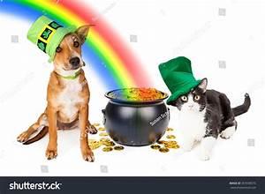 Cat dog wearing irish st patricks stock photo 307038575 for Dog day sitting