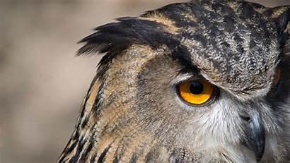 Owl 4k Bird Wallpapers Background Amusing Birds