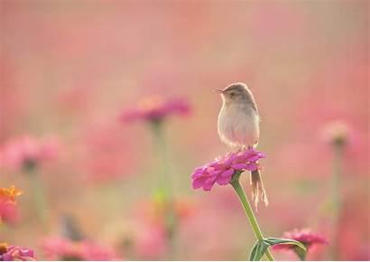 Birds Flowers Plants Animals Bird Flower Nature