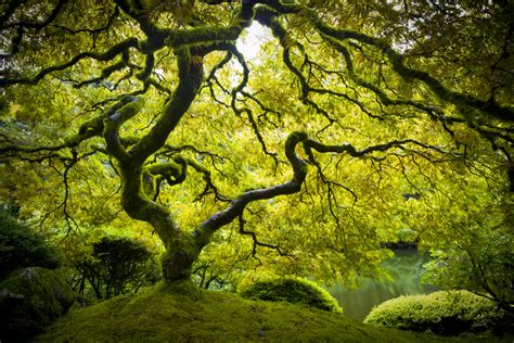 peter lik wallpaper gallery