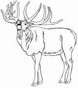 Elk Coloring Animals Sheets Deer Animal Template Town Sketch sketch template