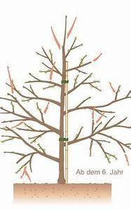 Apfelbaum Schneiden Sommer : obstb ume schneiden 10 tipps gardens garten and bonsai ~ Lizthompson.info Haus und Dekorationen