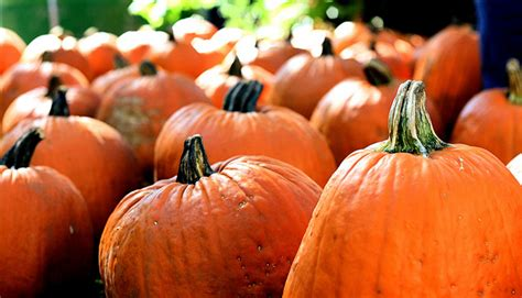 100 pumpkin patches near st peters mo the 13 best