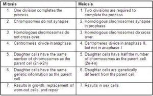 Difference Between Mitosis and Meiosis Chart