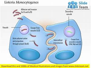 Listeria Monocytogenes Medical Images For Power Point