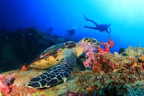 zanzibar diving hotel watersports beach