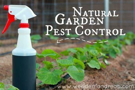 Natural Garden Pest Control Homemdbiz