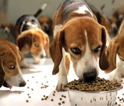 dog food  beagles    healthy