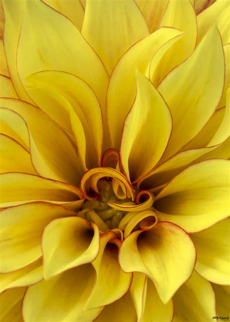 macro flower photography tips mike mcroberts photography